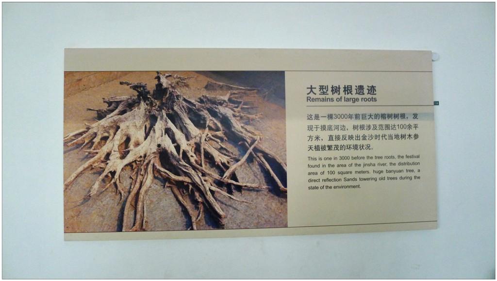 大型樹根遺跡